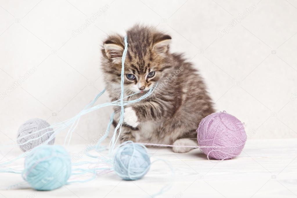 小猫玩球图片_漂亮的小猫玩毛线球 — 图库照片©DenisenkoMax#73286211