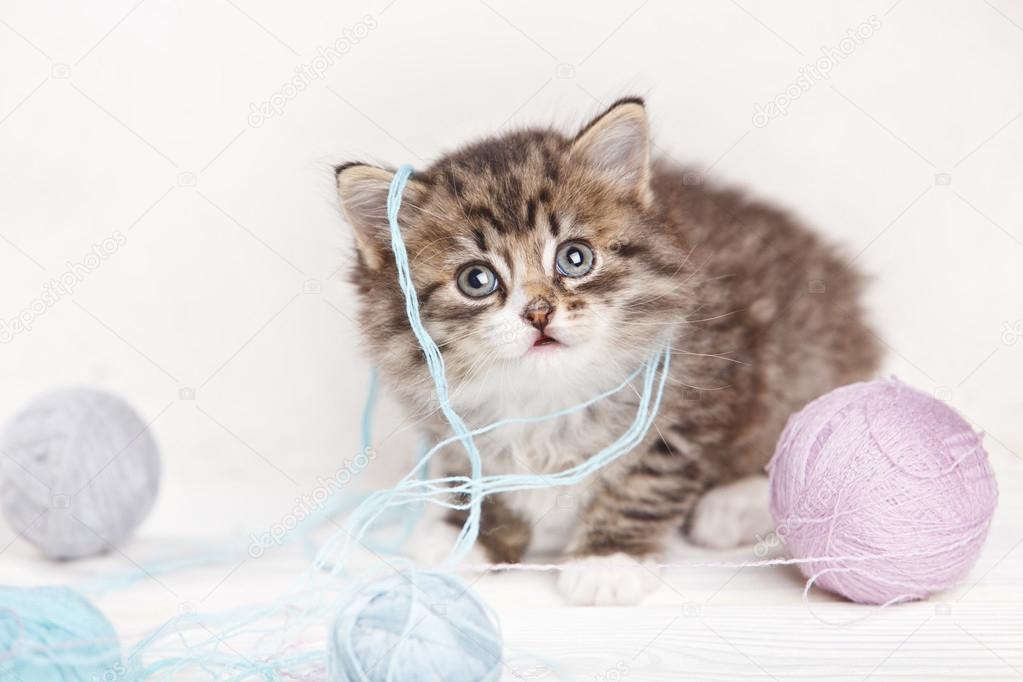 小猫玩球图片_漂亮的小猫玩毛线球 — 图库照片©DenisenkoMax#73286281