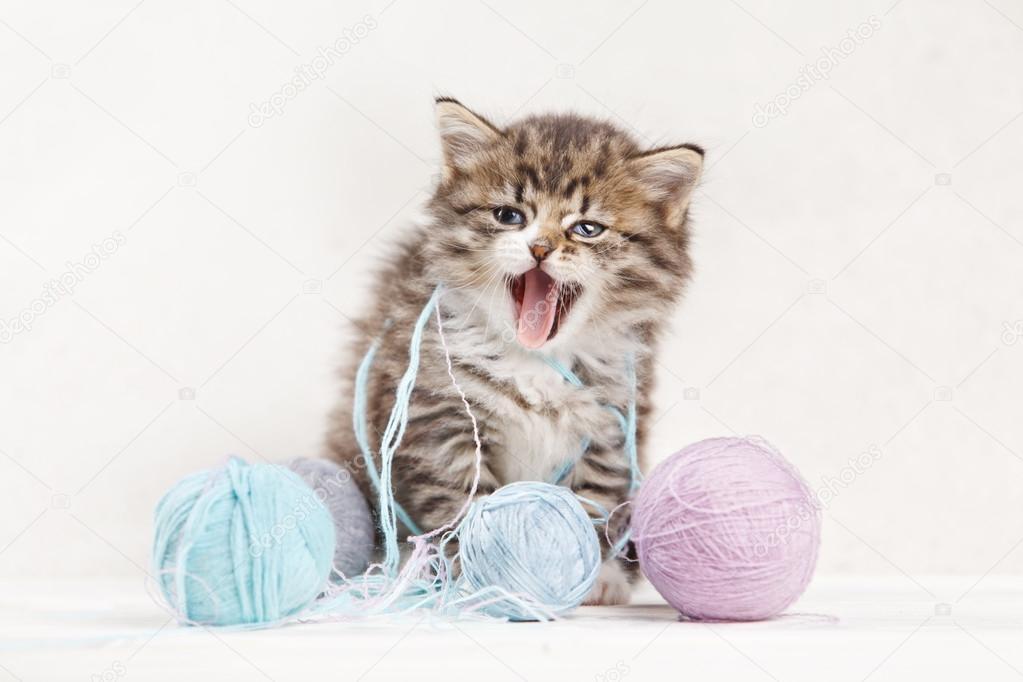 小猫玩球图片_漂亮的小猫玩毛线球和张口结舌 — 图库照片©DenisenkoMax#73286351
