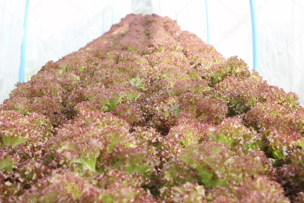 Hydroponics method of growing plants using mineral nutrient solu