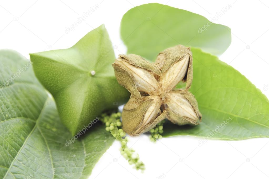 Sacha-Inchi peanut,capsule seeds fruit of sacha-Inchi peanut