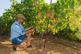 Fotografia Giovane uomo, viticoltore, nel vigneto