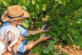 Fotografia Giovane coppia, viticoltori, nel vigneto