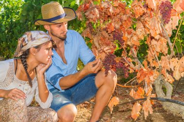 Disappointed farmers inspecting mildew parasite infected vines