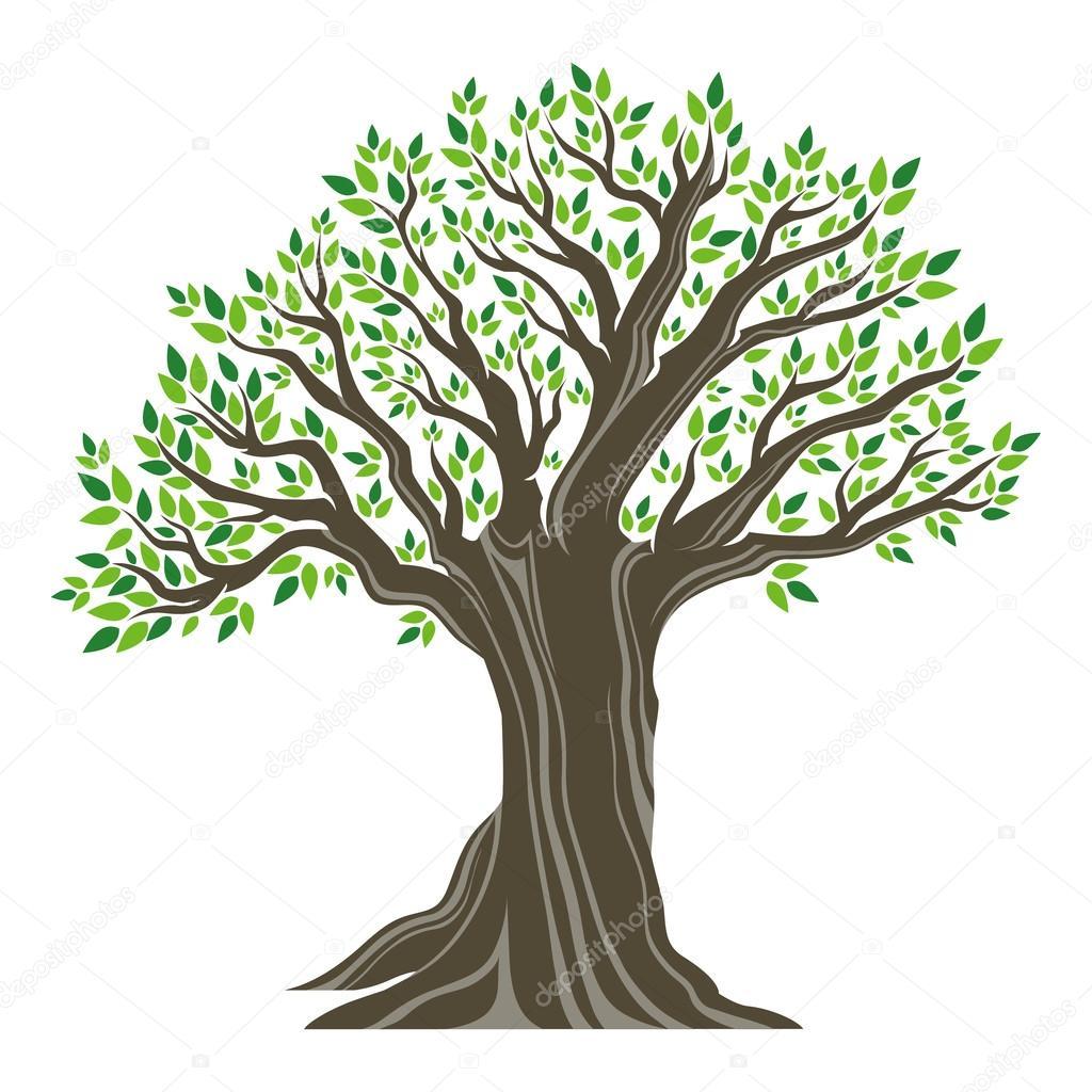 Im genes arbol de olivo dibujo hermoso rbol de olivo for Que significa dibujar arboles secos