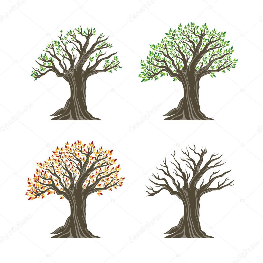 bäume in vier jahreszeiten - vektorgrafik: lizenzfreie