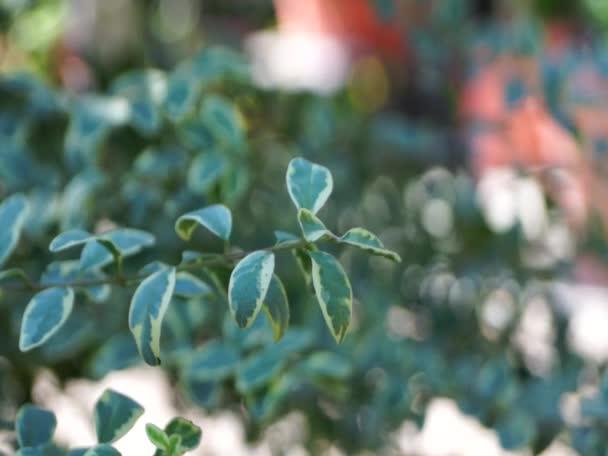 Zelený list v japonské zahradě