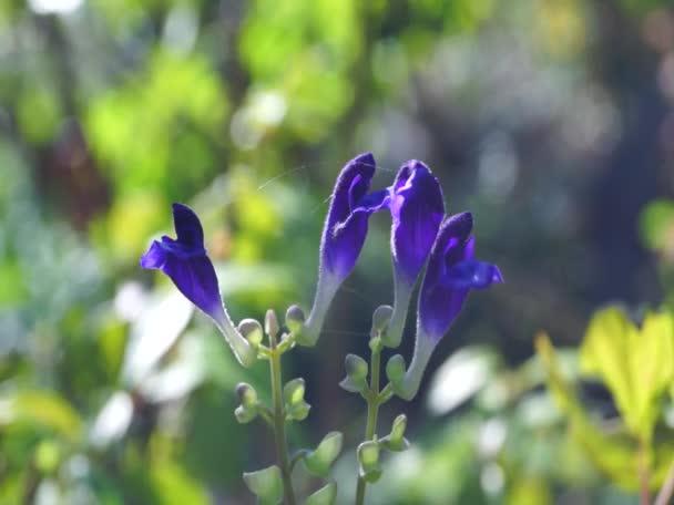 Fialové květy v japonské zahradě