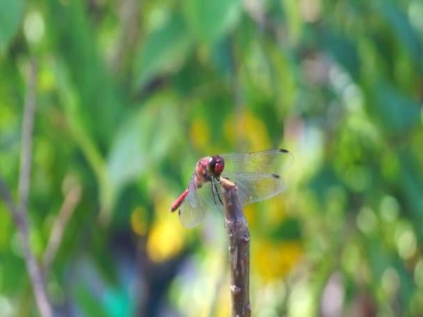Vážka v japonské zahradě