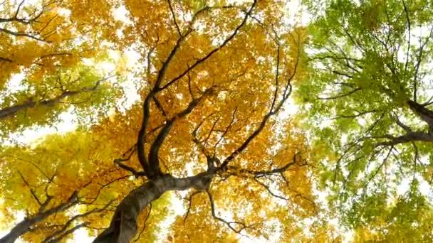 Langsam geht man über einen großen Holzsteg in einen See und fliegt über das Seewasser. Türkisfarbenes Wasser in einem Bergwaldsee mit Kiefern. Luftaufnahme des blauen Sees und des grünen Waldsees. Schöne Herbstlandschaft im herbstlichen Eichenwald.