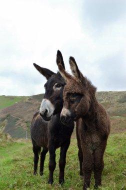 Female and baby donkey