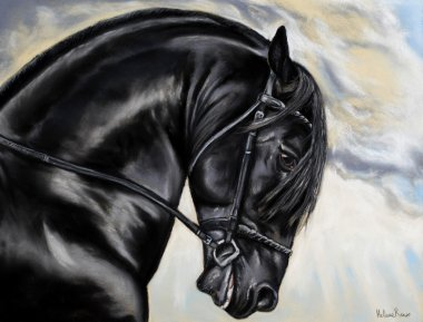 Drawing of a Friesian horse