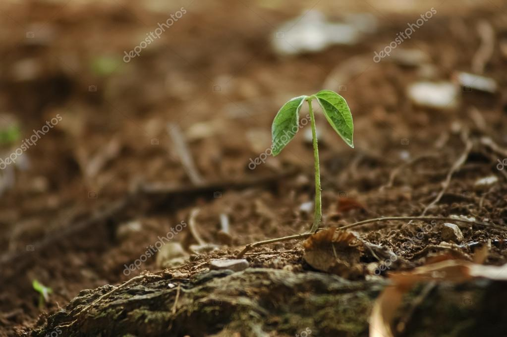 New hope from growing little plant from the earth