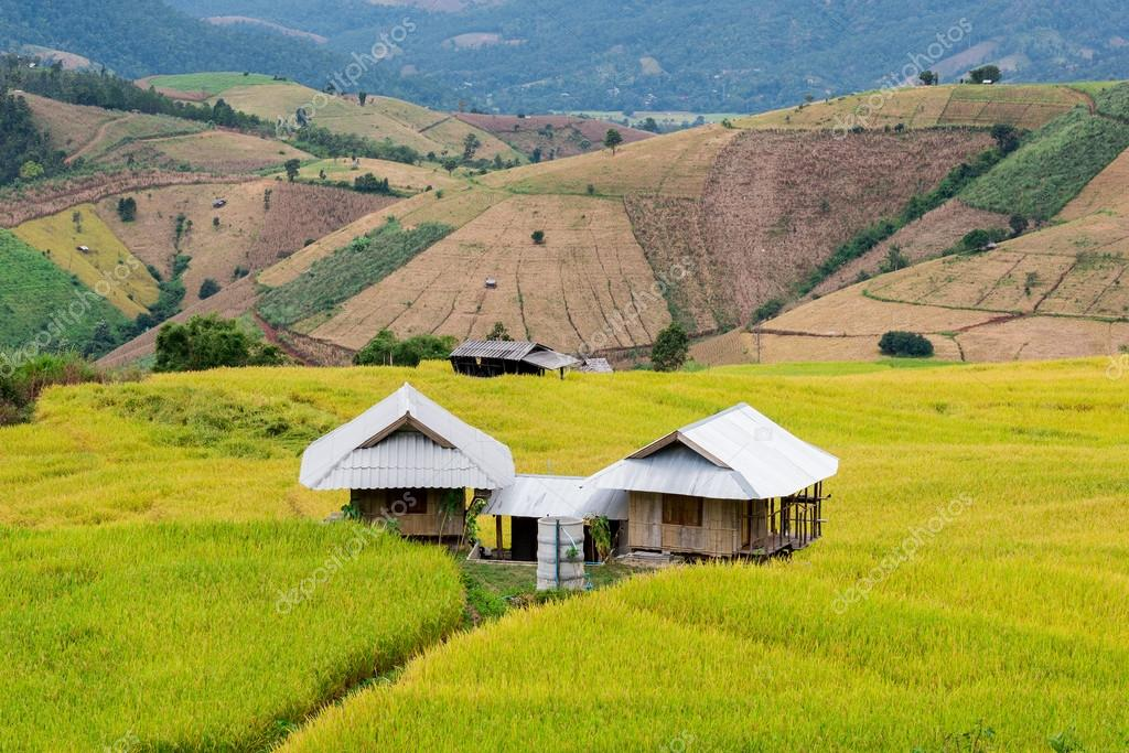 Terraced rice fields in northern Thailand ,Pa pong peang, Chiang