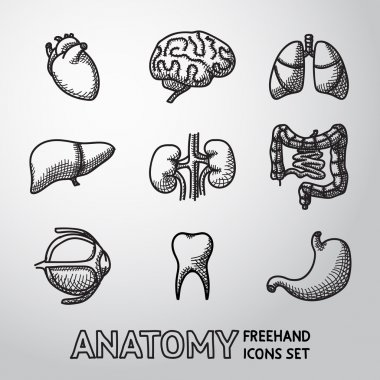Internal human organs handdrawn icons