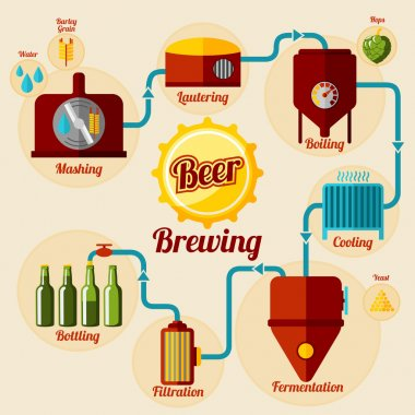 Beer brewing process infographic.
