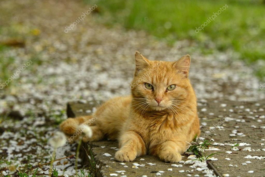 Domestic cat resting in the green grass