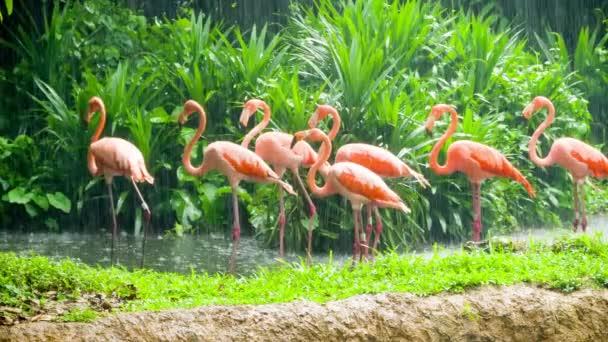růžový plameňák v zoo