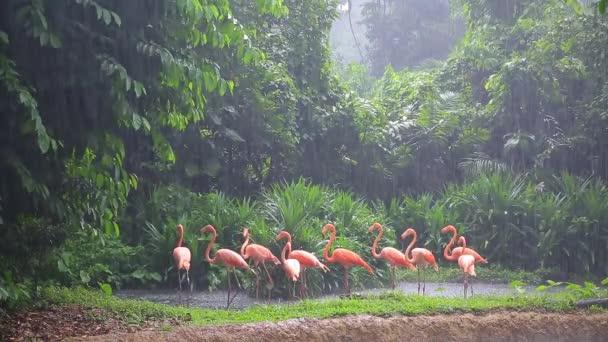 rosa flamingo im zoo