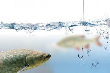 Fishing hook under water and trout fish