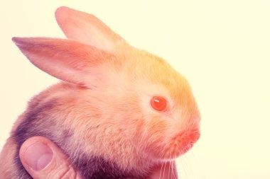 Small fluffy rabbit beige