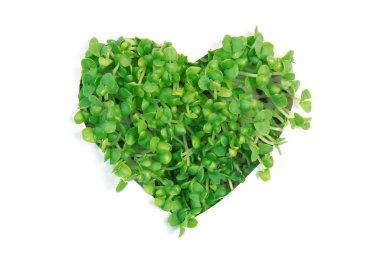 Heart made of green shoots
