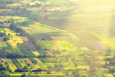 agricultural fields and trees