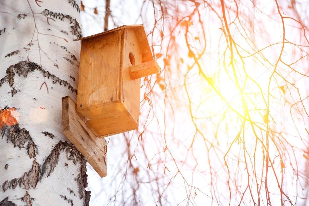 Birdhouse on birch tree