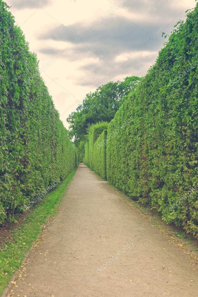 Concrete path with green hedges