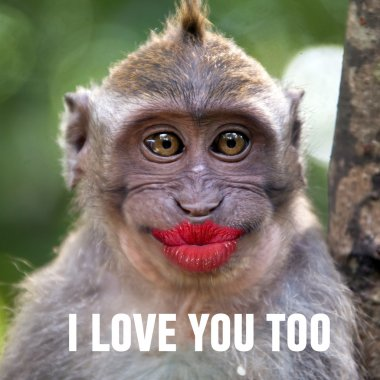 Funny monkey with a red lips
