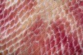 Fotografia texture della pelle di rettile