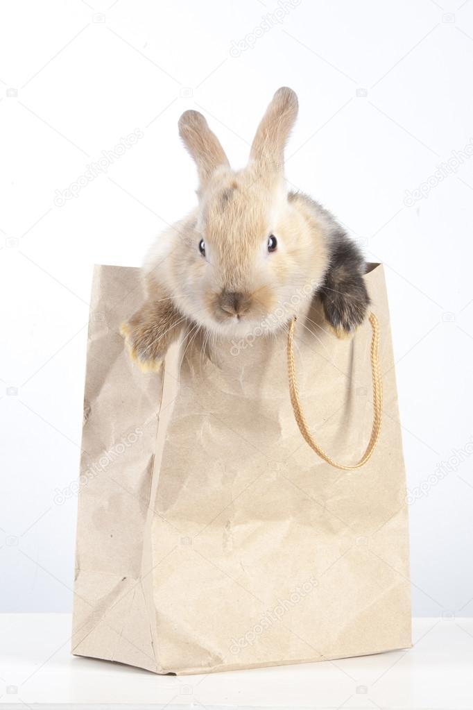 2f5a8e392 Conejo en una bolsa de papel — Fotos de Stock © watman #70252193