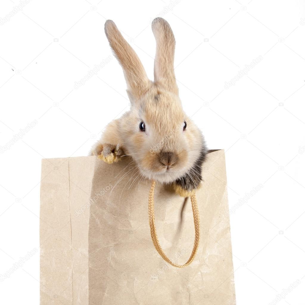 08aaa1a5d Conejo en una bolsa de papel — Foto de stock © watman #70255699