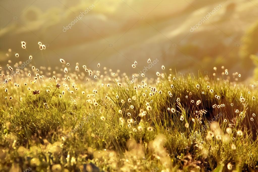 Green meadow in the rays