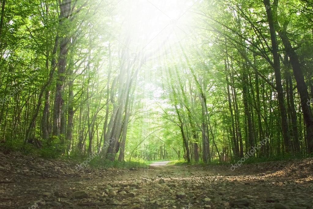 Фотообои Весенний зеленый лес