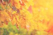 Fotografie Žlutá podzimní listí a větve