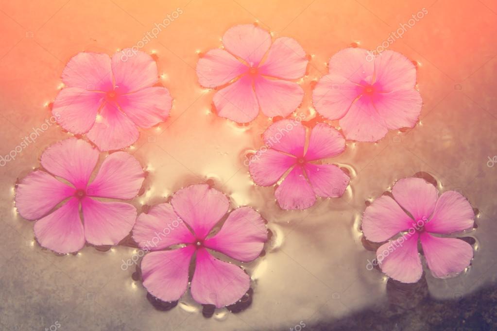Pink flowers floating in water