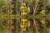 malebné podzimní Les