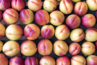 Rows of fresh red peaches