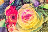Okrasná kapusta s mnoha květy