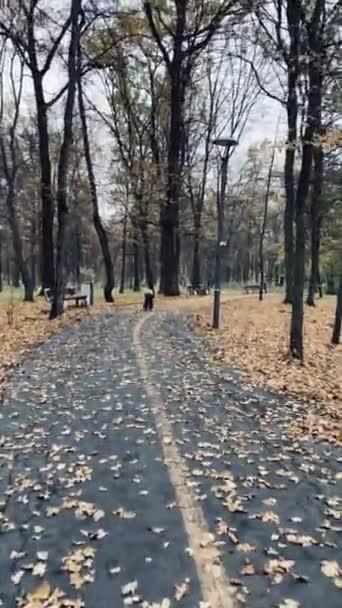 A kis vidám, bőrös fiú biciklizik az őszi parkban..