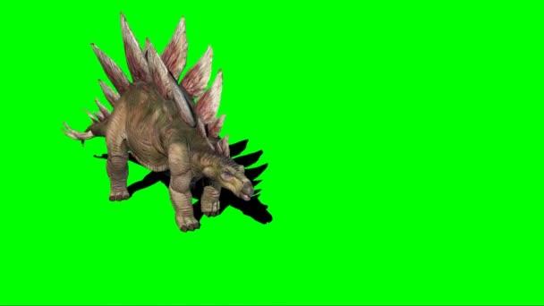Stegosaurus Dinosaur chůze na zelené obrazovce
