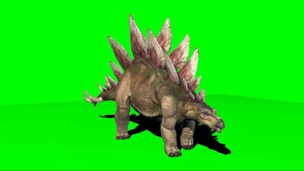 Stegosaurus dinoszaurusz séta a zöld képernyőn