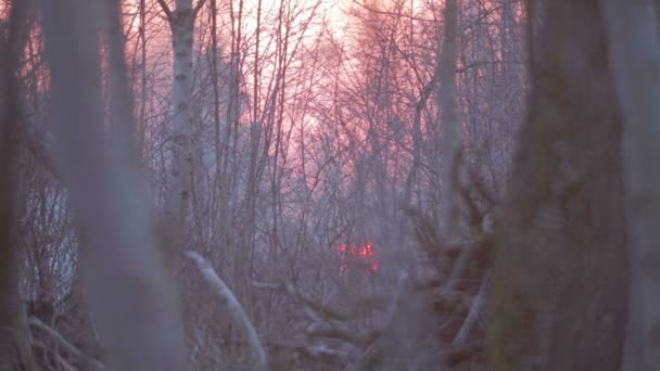 Západ slunce v křoví se stromy. Oblohu s mraky při západu slunce - taymlaps. Západ slunce v poli za stromy.