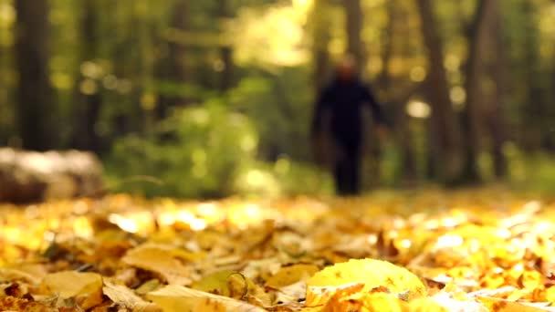 Příroda Procházka na podzim. Muž chodí v podzimním lese. Muž v podzimním parku. Nohy na podzimní listí. Chodit v podzimním parku, lesa.
