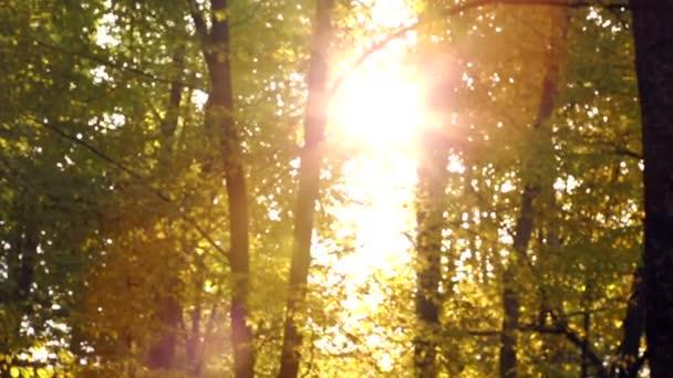 Autumn trees in sunlight.Ray of sun shining through autumn trees.Sunbeam in the autumn forest.