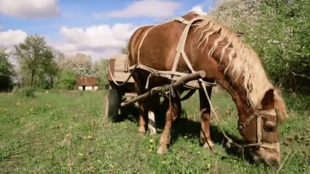 Koně a vozík, pasoucí se v přírodě. Kůň, tažený náklad, pasoucí se na venkově. Venkovské krajiny s koněm na jaře