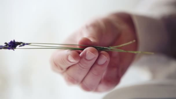 Hand man close up with flower of lavender. Mans hand with a sprig of lavender.