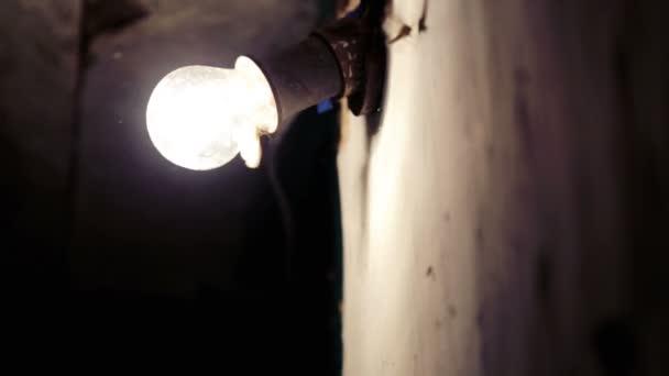 Motýli se hrnou do žárovky spalování. Můry létat v blízkosti světlometu.