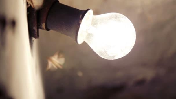 Pillangók állomány az égő villanykörte. Lepkék repülni a lámpa.